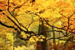 Takken van gouden bladeren royalty-vrije stock fotografie