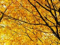 Takken van herfstbomen als aardachtergrond royalty-vrije stock foto's