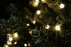 takken van Kerstmissparren stock afbeelding