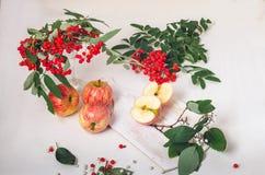 Takken van lijsterbes met rode appelen op witte houten backgroundbranches van lijsterbes met rode appelen op een wit Stock Foto