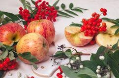 Takken van lijsterbes met rode appelen op witte houten backgroundbranches van lijsterbes met rode appelen op een wit Royalty-vrije Stock Afbeelding