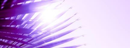 Takken van palm in proton purpere kleur die worden gestemd royalty-vrije stock fotografie
