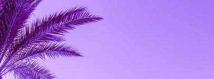 Takken van palm in proton purpere kleur die worden gestemd stock foto