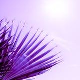 Takken van palm in proton purpere kleur die worden gestemd stock foto's
