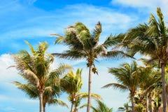 Takken van palmen onder blauwe hemel Cuba, Varadero royalty-vrije stock afbeeldingen