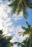 Takken van palmen onder hemelachtergrond royalty-vrije stock fotografie