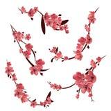 Takken van roze het tot bloei komen sakura royalty-vrije illustratie