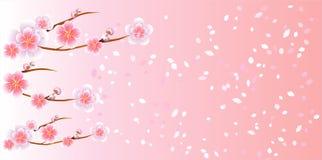 Takken van Sakura en bloemblaadjes vliegen op lichtrose achtergrond wordt geïsoleerd die Appel-boom bloemen Cherry Blossom Vector vector illustratie