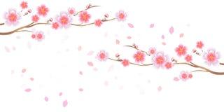 Takken van Sakura en bloemblaadjes vliegen op witte achtergrond wordt geïsoleerd die Appel-boom bloemen Cherry Blossom Vectoreps  vector illustratie
