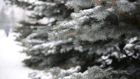 Takken van sparren in sneeuw bij park tijdens een sneeuwstorm stock videobeelden