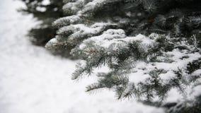 Takken van sparren in sneeuw bij park tijdens een sneeuwstorm stock footage