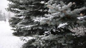 Takken van sparren in sneeuw bij park tijdens een sneeuwstorm stock video