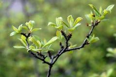 Takken van struiken met groene bladeren in de lente royalty-vrije stock foto's