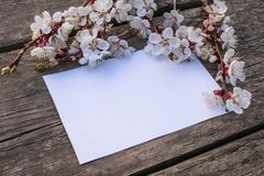 Takken van witte bloemen - abrikozen en gele stamens op de achtergrond van oude raad Plaats voor tekst r royalty-vrije stock foto