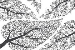 Takkensilhouetten op wit. Vectorachtergrond Stock Foto
