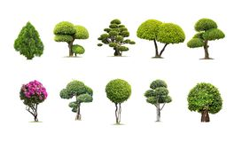 Tako trees bending. Isolated tree on white background , The collection of trees. Tree database Botanical garden organization elements of nature in Thailand royalty free stock photo