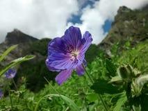 Tal der Blumen lizenzfreie stockfotos