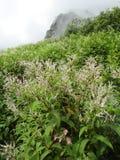 Tal der Blumen Stockfotos