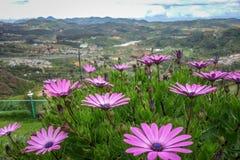 Tal der Blumen Stockbilder