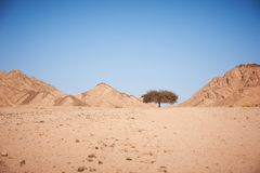 Tal in der Wüste mit einem Akazienbaum mit Bergen Stockbild