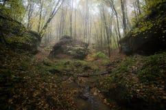 Tal im Dschungel mit Bäumen und Felsen Lizenzfreies Stockfoto