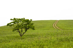 Tal mit Baum und Weg Stockfotos