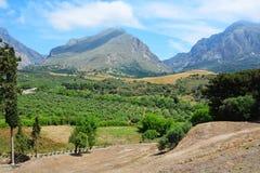 Tal mit Olivenbaumbergen Himmel und Wolken Lizenzfreie Stockfotos