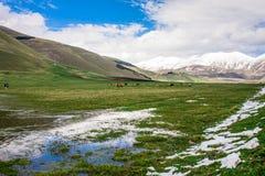 Tal, See, Tiere und Berge Lizenzfreies Stockfoto