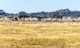 Tal in Tansania Stockfoto