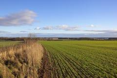 Tal von York und von Weizen Stockbilder