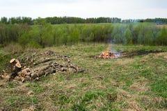 Tala de árboles. Imagen de archivo