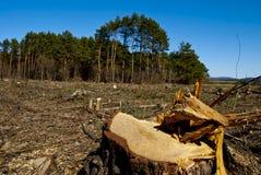 Tala de árboles Fotos de archivo libres de regalías