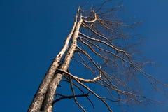 Tala de árboles Imágenes de archivo libres de regalías