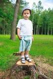 Tala de árboles Fotografía de archivo libre de regalías