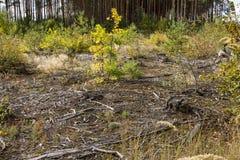 Tala de árboles de la humanidad Fotografía de archivo