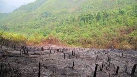 Tala de árboles, después del incendio forestal, desastre natural almacen de metraje de vídeo