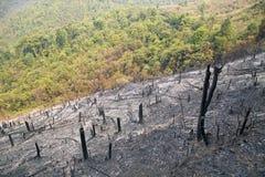 Tala de árboles, después del incendio forestal, desastre natural, Laos Foto de archivo