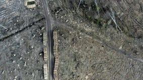 Tala de árboles, destrucción ambiental, visión aérea, Polonia almacen de metraje de vídeo