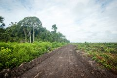 Tala de árboles en Borneo imagenes de archivo