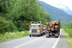 Tala de árboles en Canadá septentrional Foto de archivo libre de regalías