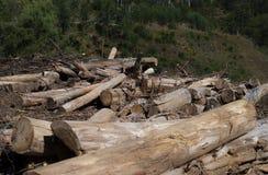 Tala de árboles en Portugal Fotografía de archivo libre de regalías