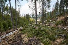 Tala de árboles en Rumania Imágenes de archivo libres de regalías