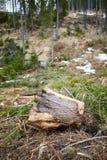 Tala de árboles en Rumania Fotos de archivo libres de regalías