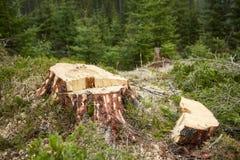 Tala de árboles en Rumania Fotos de archivo