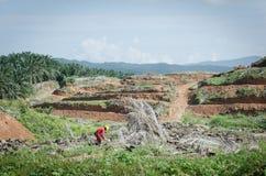 Tala de árboles para el aceite de palma Imagenes de archivo