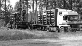Tala de árboles y cargamento automatizado sobre un vehículo del camión metrajes