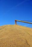 Taladro del grano en el trabajo imágenes de archivo libres de regalías
