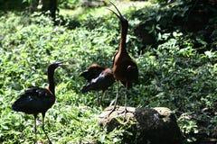 Talande fågel på junggle Royaltyfria Foton