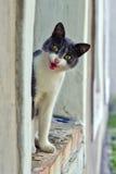Talande katt Arkivfoton