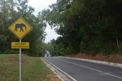 Talang road. Elephan some time cross the road Stock Photography